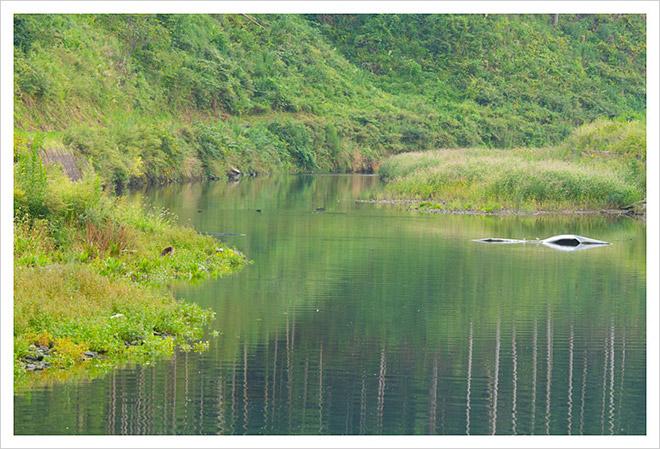 20130913秋鮭