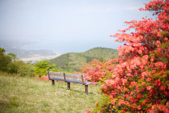 南三陸歌津 田束山(たつがねさん) のヤマツツジ7
