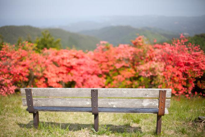 南三陸歌津 田束山(たつがねさん) のヤマツツジ6