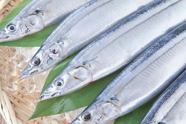 2015年のさんま不漁で得たもの 山内鮮魚店
