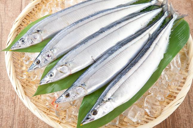 生秋刀魚(サンマ)