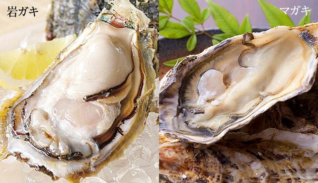 主に日本で多く水揚げされる真牡蠣と岩牡蠣は、水揚げされるシーズンも違いますし、育て方も違います。マガキとイワガキ、双方の牡蠣の味の違いも含めご紹介します。