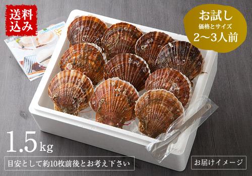 【送料込み】三陸産殻付活ホタテ 約1.5kg(6枚前後)帆立ナイフ・レシピ付 ※約2~3人前