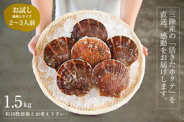 【送料込み】三陸産殻付活ホタテ 約1.5kg(約10枚前後)帆立ナイフ・レシピ付 ※約2~3人前