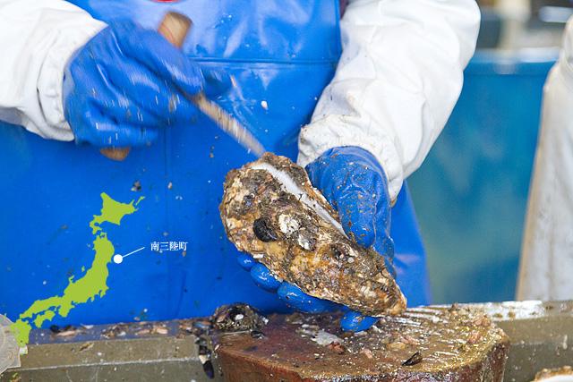 牡蠣(カキ)の宝庫、南三陸内湾