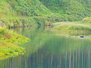 自然の恵みを「育てる」南三陸の取り組み。