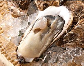 濃厚 宮城県産 牡蠣(かき)
