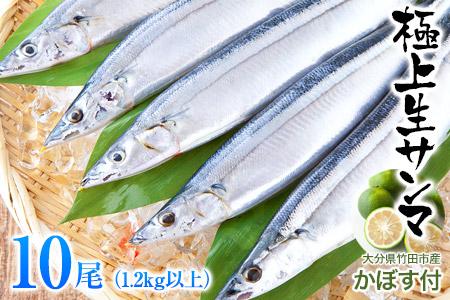気仙沼産生さんま(大サイズ)10尾 1.4kg以上