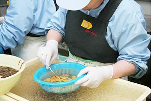甘塩ウニは、獲れたての「天然ムラサキウニ」を職人が一粒一粒丁寧に剥き身にし塩漬けにしています。