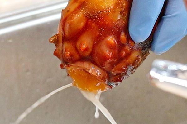 殻付きホヤのさばき方レシピ2