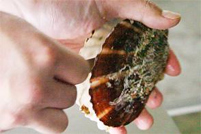 殻付きホタテのさばき方・むき方レシピ1