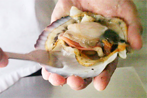殻付きホタテのさばき方・むき方レシピ2