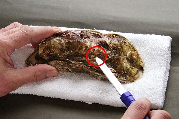 殻付き牡蠣(かき)のむき方・さばき方レシピ2