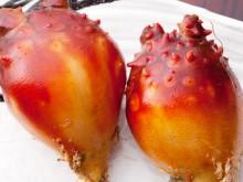 三陸産「殻付ほや」1kg(4~6個) ホヤの剥き方レシピ付 約1~2人前《クール冷蔵発送》